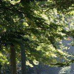 Dutch Forest