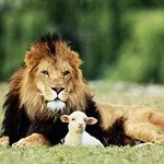 lion-and-lamb1