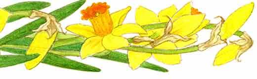 Flower-border-bottom