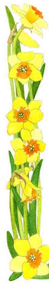 Flower-border-right-bottom