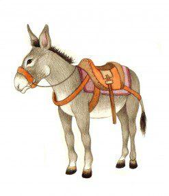 grey-donkey-this-one