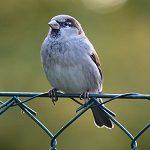free bird s